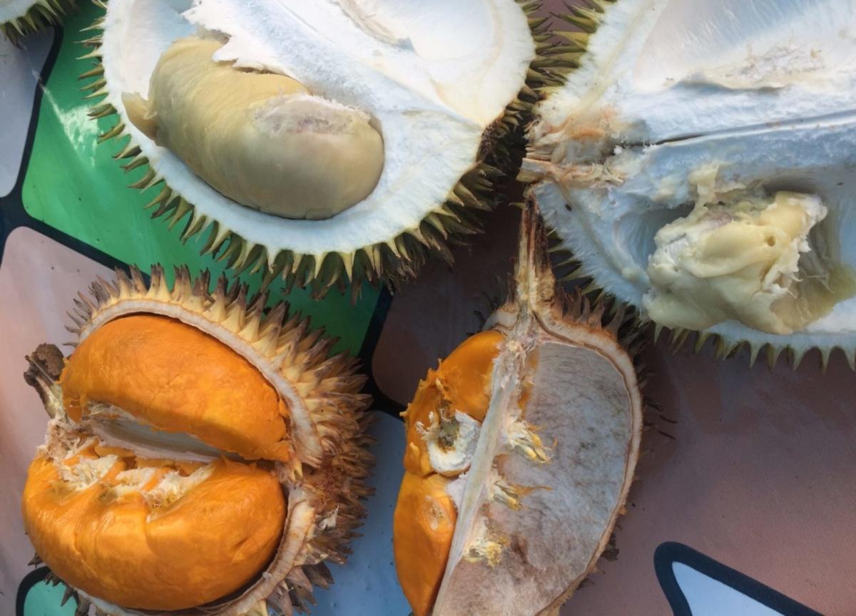 """Article – Part 2: """"Durian und die Kolonialität der Macht"""""""