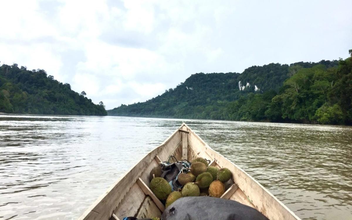 """New article: """"Durian und die Kolonialität der Macht"""""""